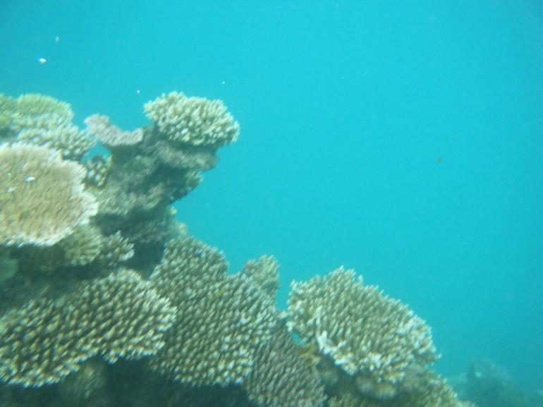 Coral Garden - Cairns & the Tropical North
