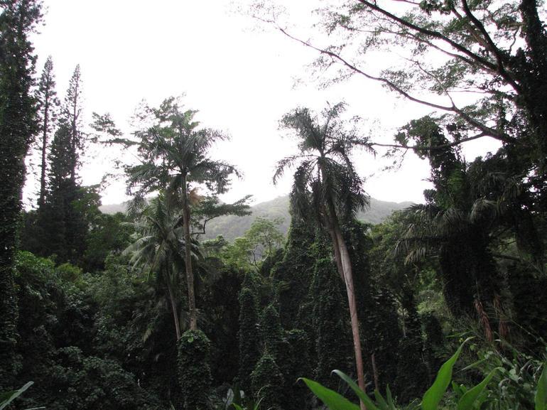 Manoa - Rainforest - Oahu