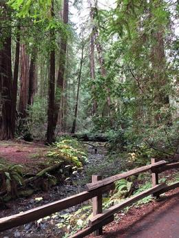 A view of Muir Woods. Totally worth the trip! , Diana C - December 2016