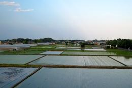 Beautiful scenery on the way back to Tokyo - rice paddies , Sandra D - June 2017