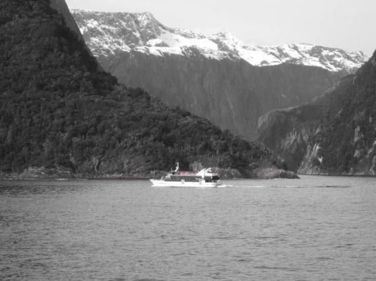 Queenstown Super Saver: Milford Sound Nature Cruise plus Walter Peak High Country Farm Tour photo 16