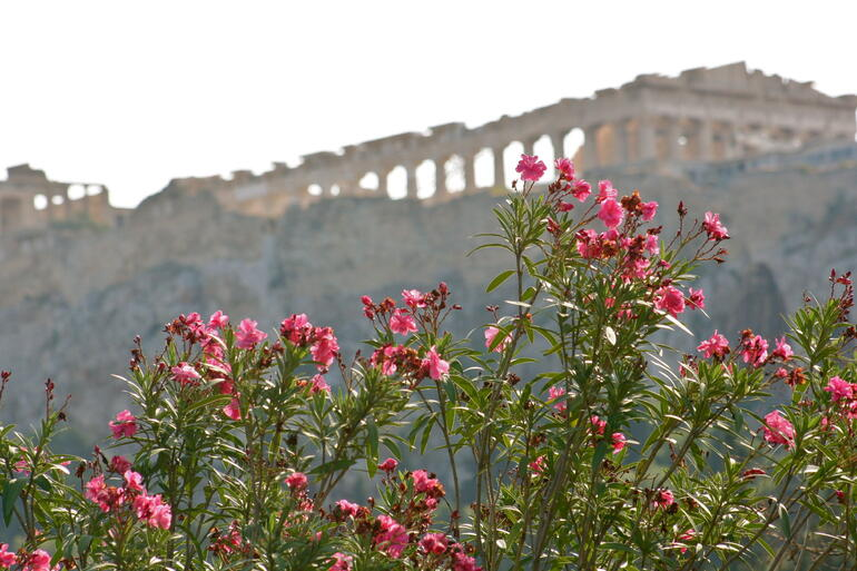 Blooming Acropolis -