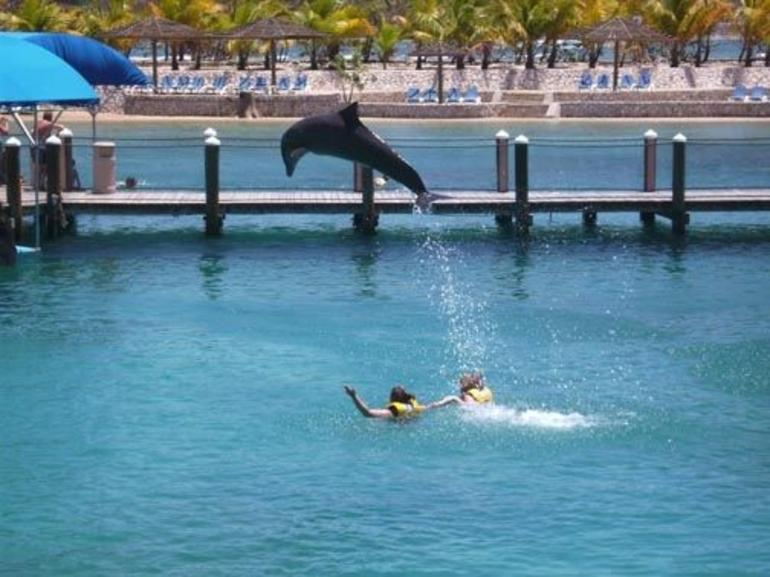 Ocean World Dolphin Swim - Puerto Plata