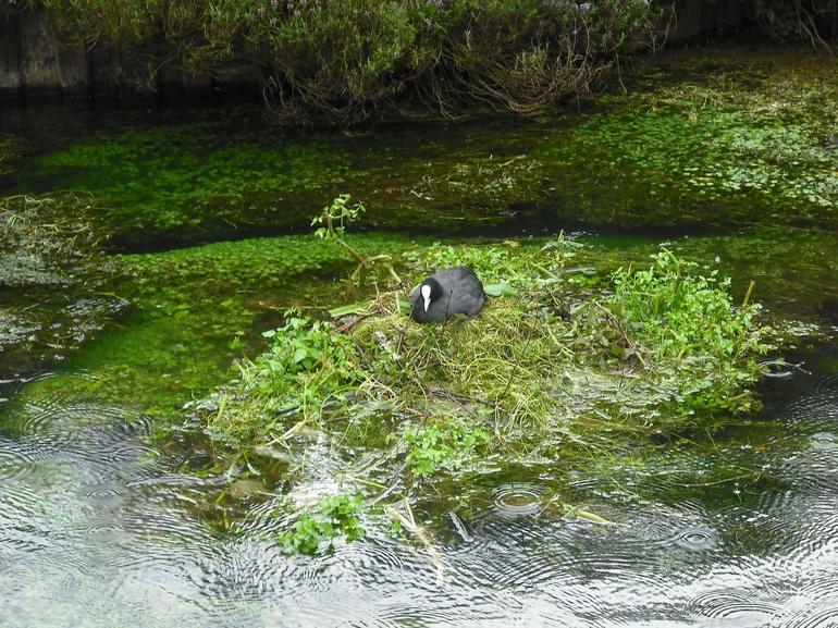 Green marshy pond - London