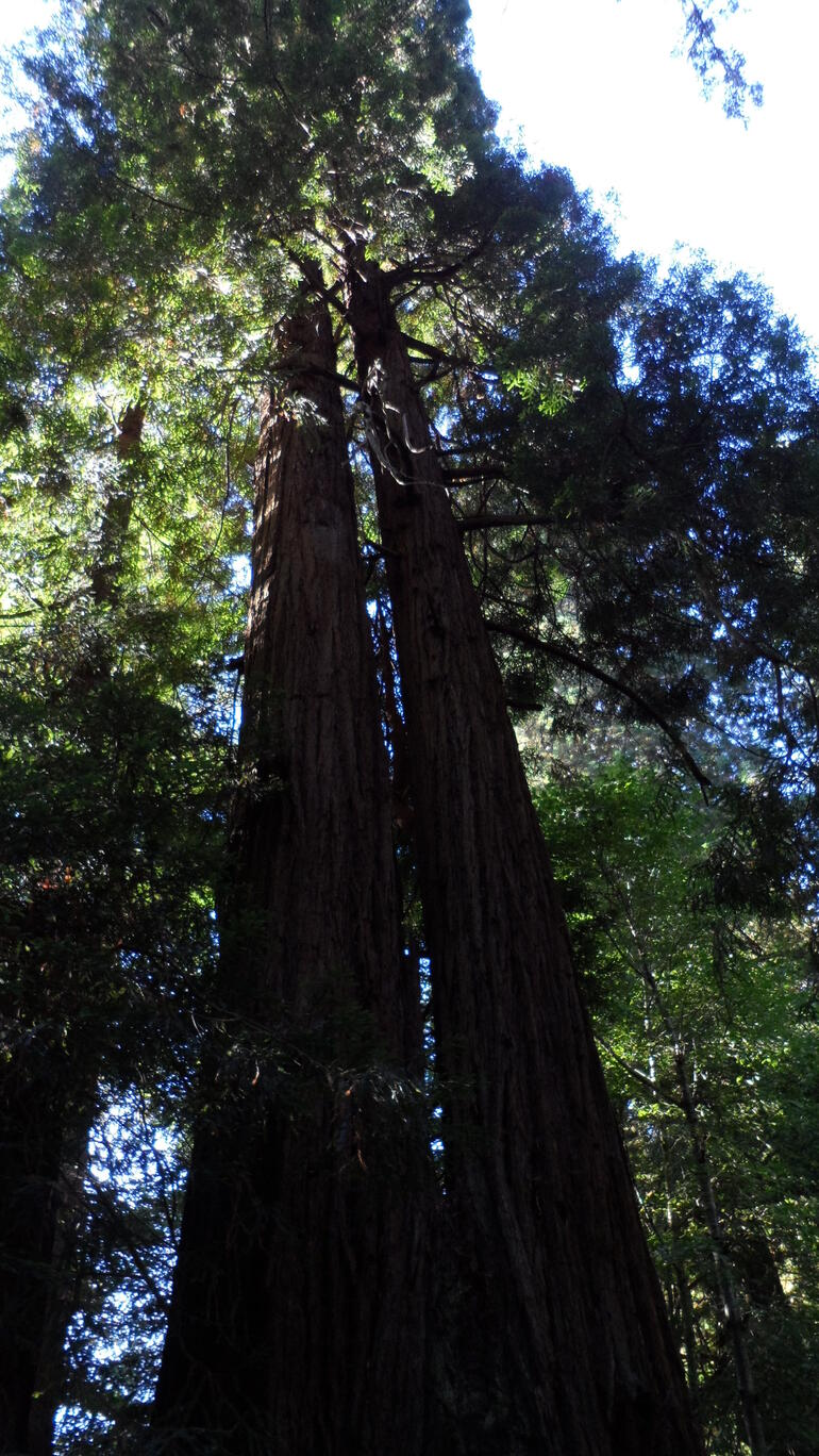 Muir Woods - Los Angeles