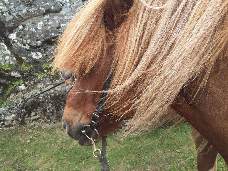Viking Horse Riding and Golden Circle Tour from Reykjavik photo 22