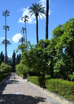 The park outside the Alcazar - June 2012
