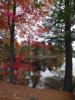 Lake , Elsa C - November 2013