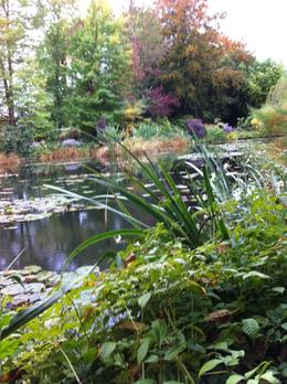 Monet's Japanese Garden, Felicia L - October 2010