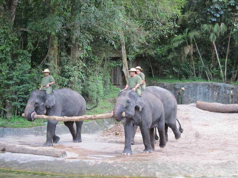 The elephant show - Singapore