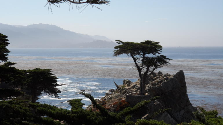 The Lone Cypress - Los Angeles