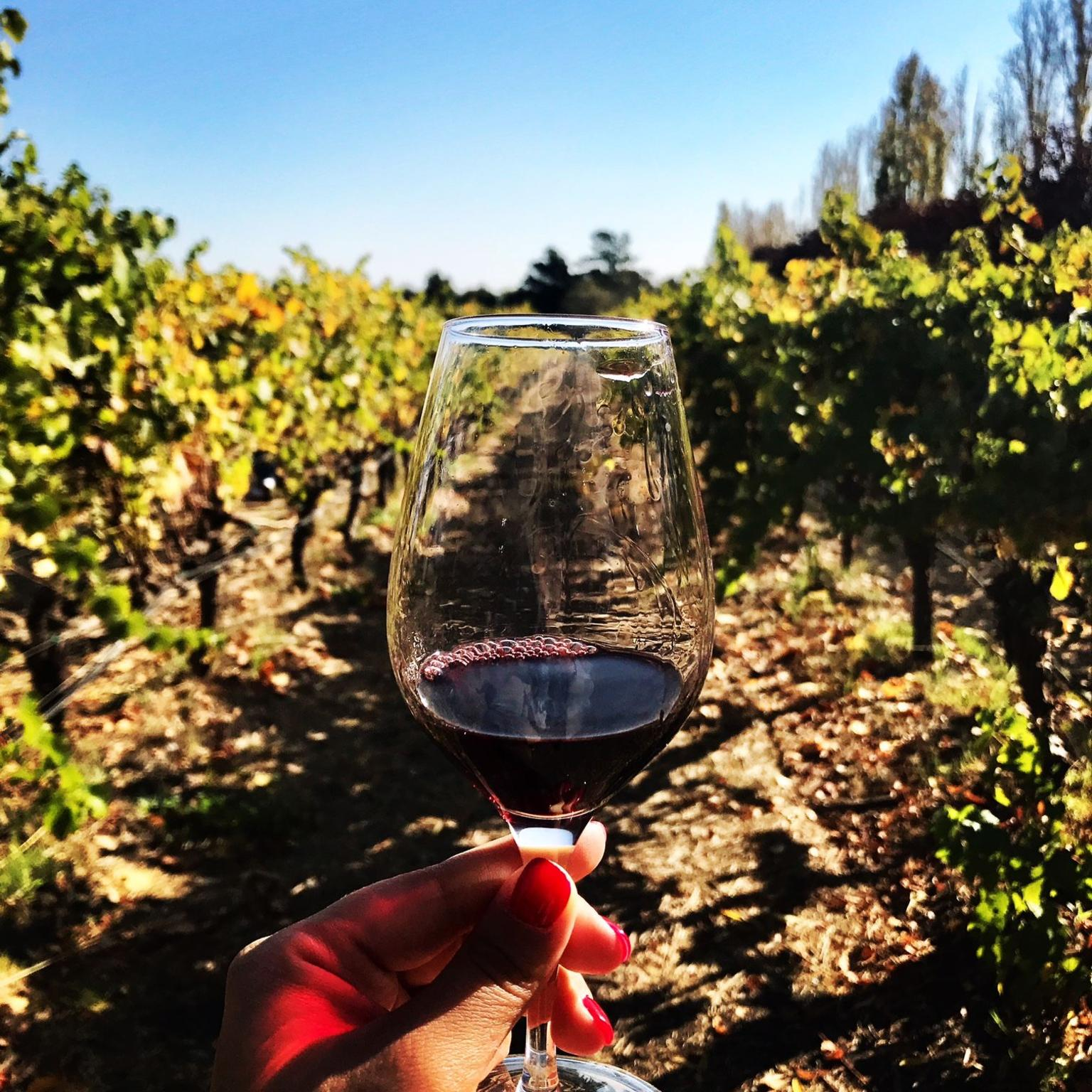 MÁS FOTOS, Napa and Sonoma Wine Country - Full Day Tour from San Francisco