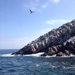 There were so many birds at the Ballestas Islands! , Rebecca H - September 2014