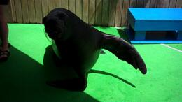 Omar the Sea Lion, JennyC - September 2011