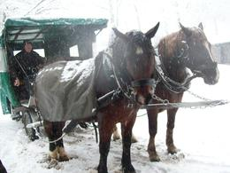 Horse and carriage ride ........ nice treat from the walk! , Ian M - January 2011