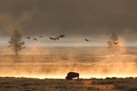 Private Yellowstone Wildlife Tour 2017  Yellowstone National Park
