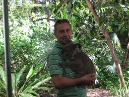 My hubby with a koala at Lone Pine Koala Sanctuary , hayley g - January 2011