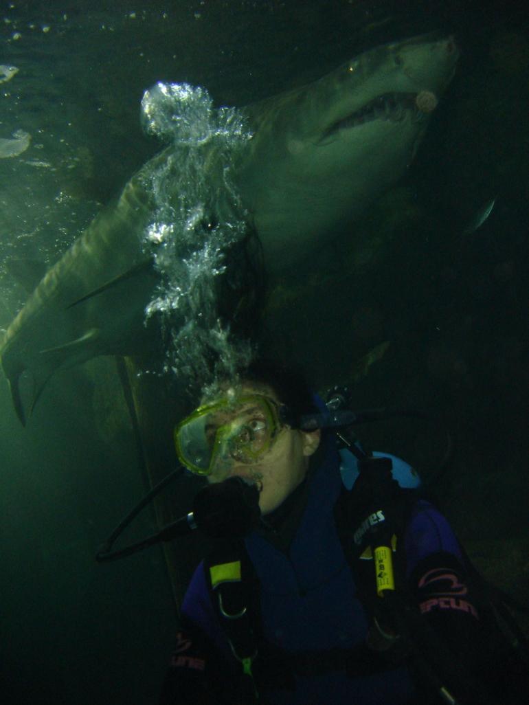 Shark above! - Sydney