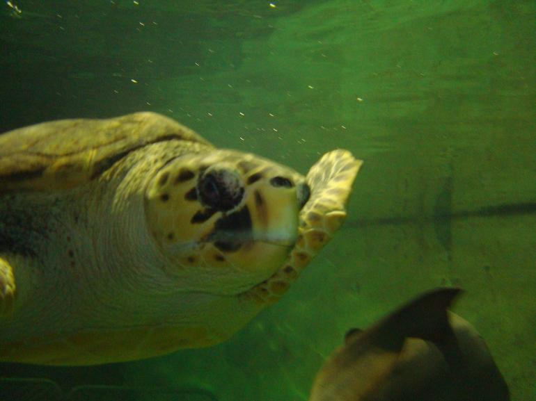 Turtle! - Sydney