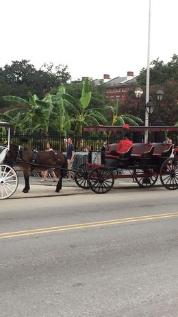 Horse carriages in front of Jackson Square , Sybil S - September 2017