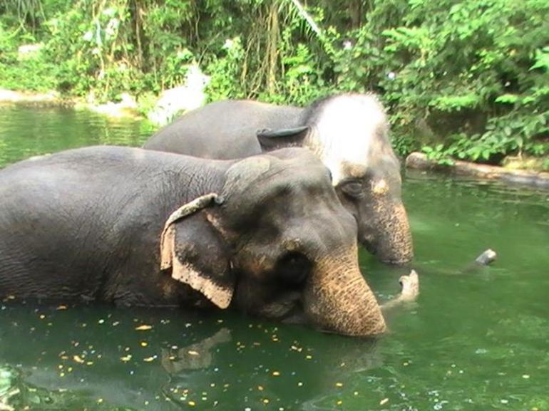 Elephants - Singapore