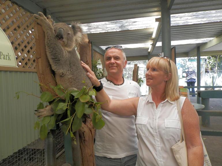 Koala and us - Sydney