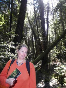 The walk through Muir woods was fantastic the hight of the trees was incredible ,worth every penny and more., Stephen M - May 2010