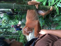 Making friends with the capuchins after talking with the keeper , Susan D - October 2016