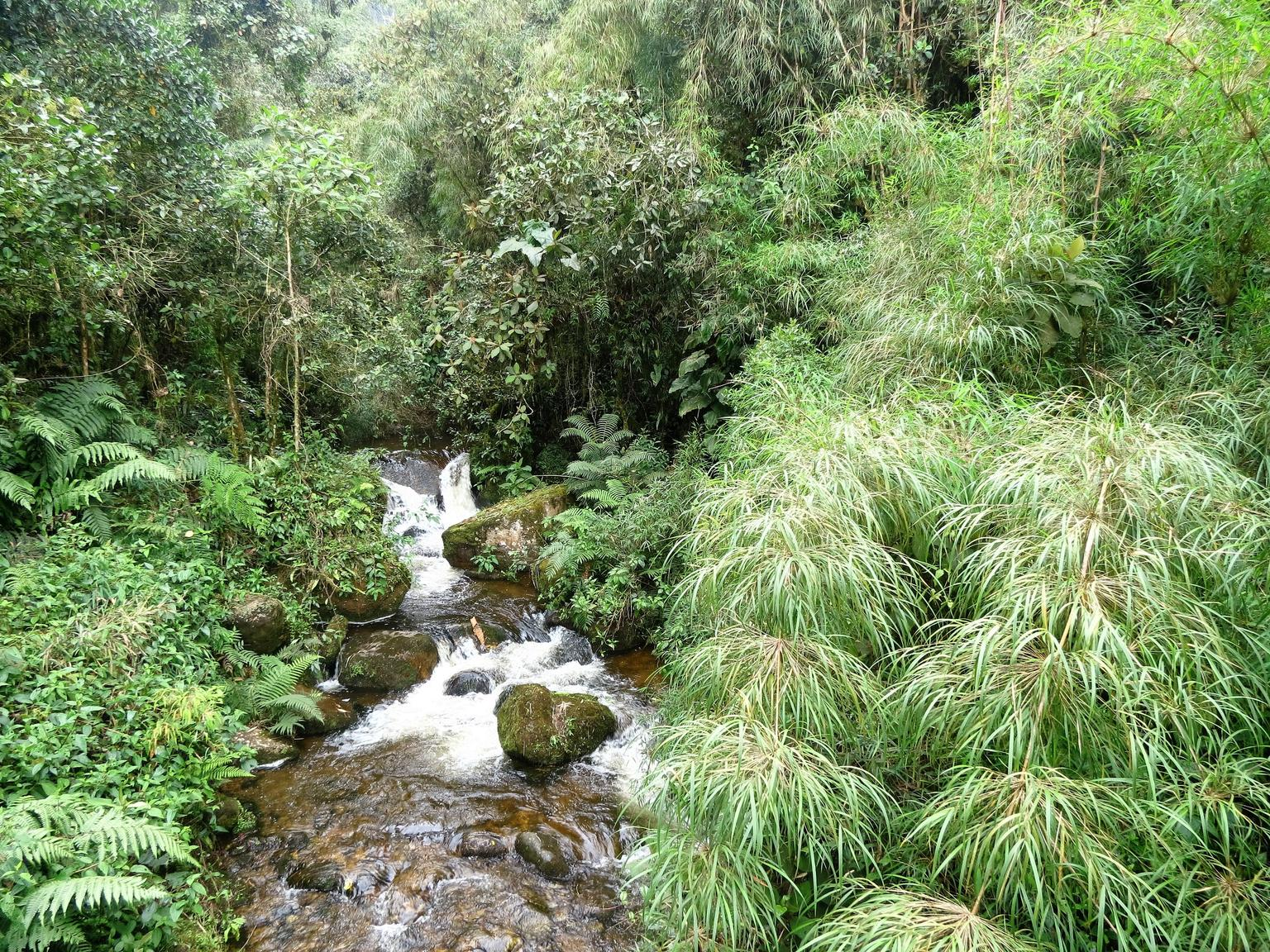 MÁS FOTOS, Hike La Chorrera and El Chiflon mighty waterfalls from Bogota