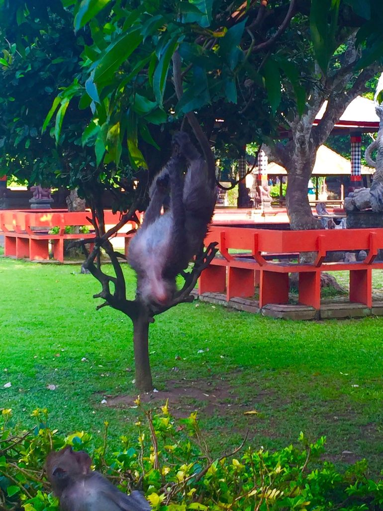 Bali Monkey Forest, Mengwi Temple, and Tanah Lot Afternoon Tour photo 18