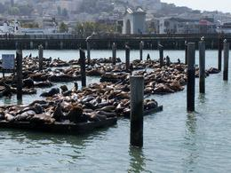 The famous sea lions at Pier 39 , Amy - June 2013