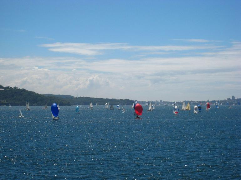 Sailing race in Sydney Harbour - Sydney