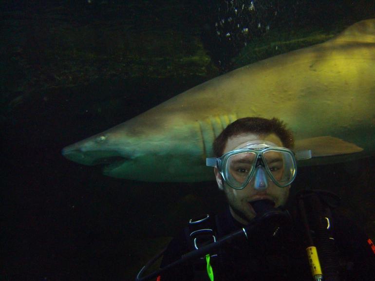 Sharky sharky! - Sydney