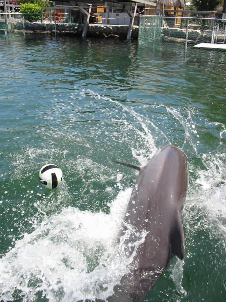 Swimming with Dolphins -