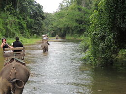 The ride over the river on the elephant , Mohan K - September 2015
