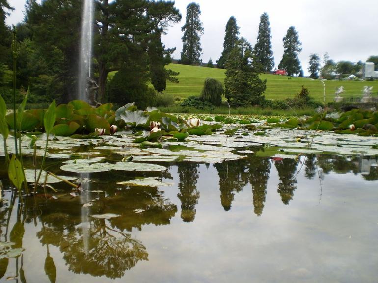 A Beautiful Garden -