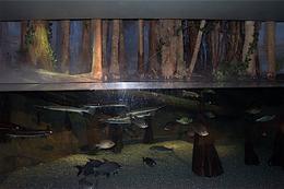 Fish , Amy - January 2013