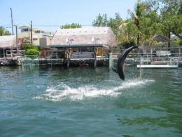 Dolphin backflips in the cove - October 2009