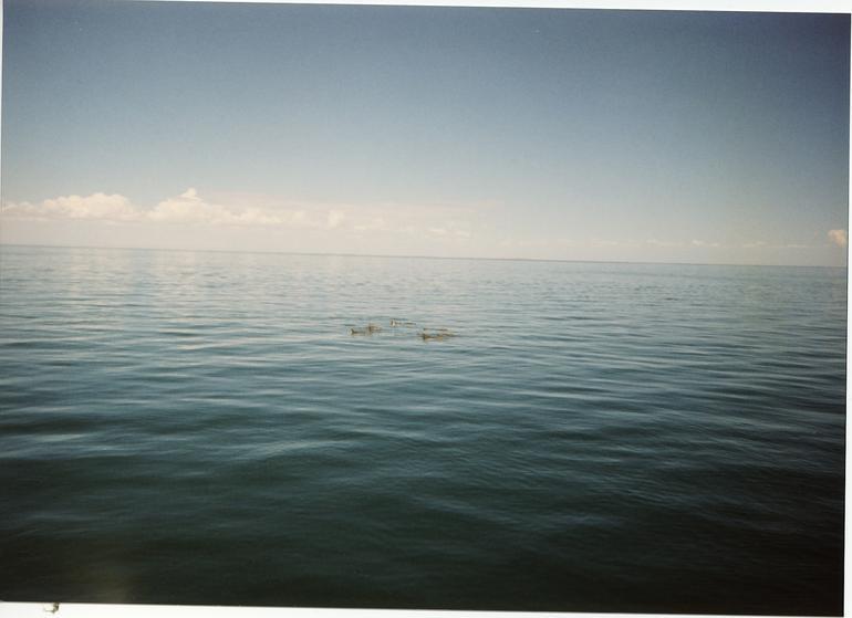 Dolphins Monkey Mia - Perth