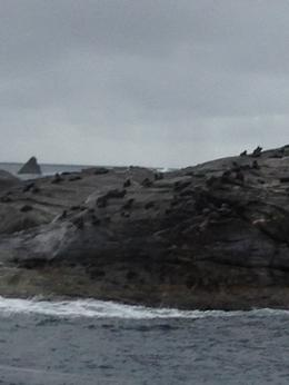 à l'entrée du Doubtful Sound sur un rocher de nombreux phoques à fourrure , Ghislaine R - May 2014