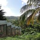 Excursión con safari en plantación y Monkeyland desde Punta Cana, Punta de Cana, REPUBLICA DOMINICANA