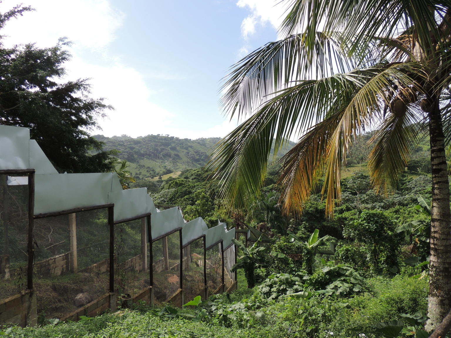 MÁS FOTOS, Excursión con safari en plantación y Monkeyland desde Punta Cana