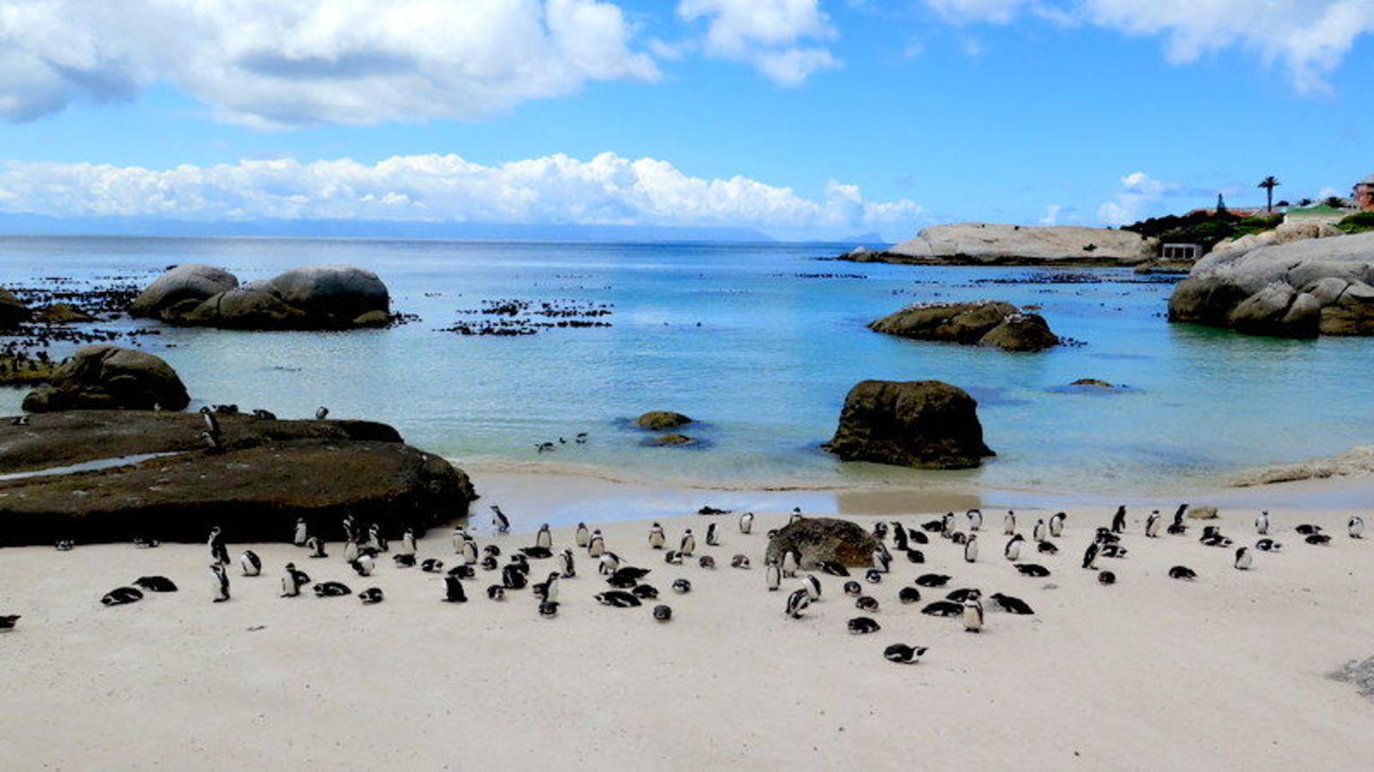 MAIS FOTOS, Excursão turística de dia inteiro pela Península do Cabo e Cape Point, saindo da Cidade do Cabo