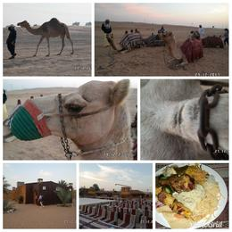 Great BBQ Dinner Camel Ride, This tour was amazing Extremely well organised , Rose Mund - January 2018