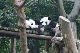 Panda Garden, Bing - May 2012