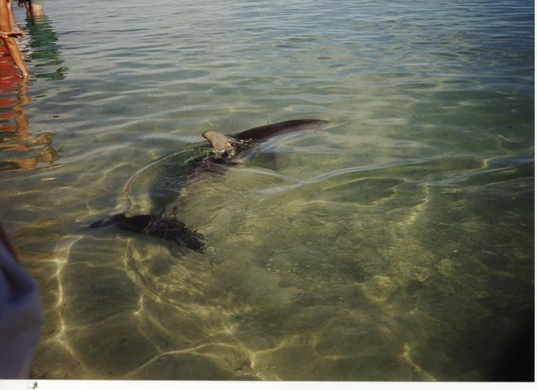 Dolphin - Perth