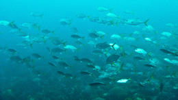 Lots of fish! , andywestmancoat - April 2011