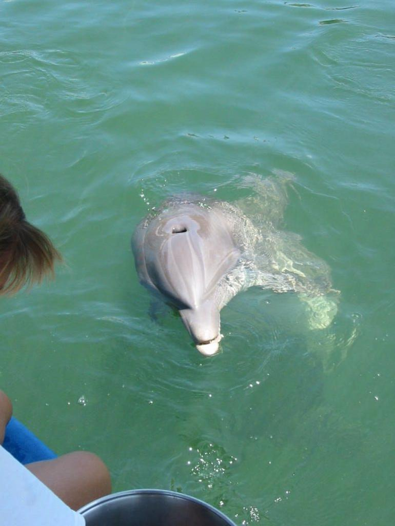 Playing with the Dolphins - Orlando