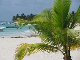 Saona Island , doake - March 2011