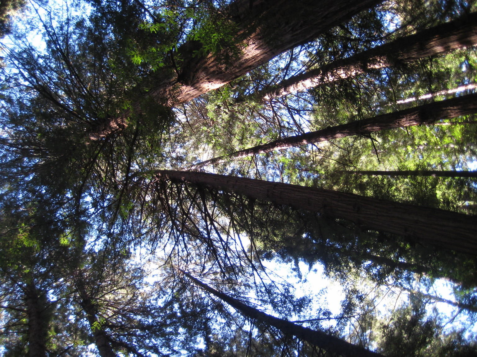 MÁS FOTOS, Muir Woods Expedition Tour of Coastal Redwoods